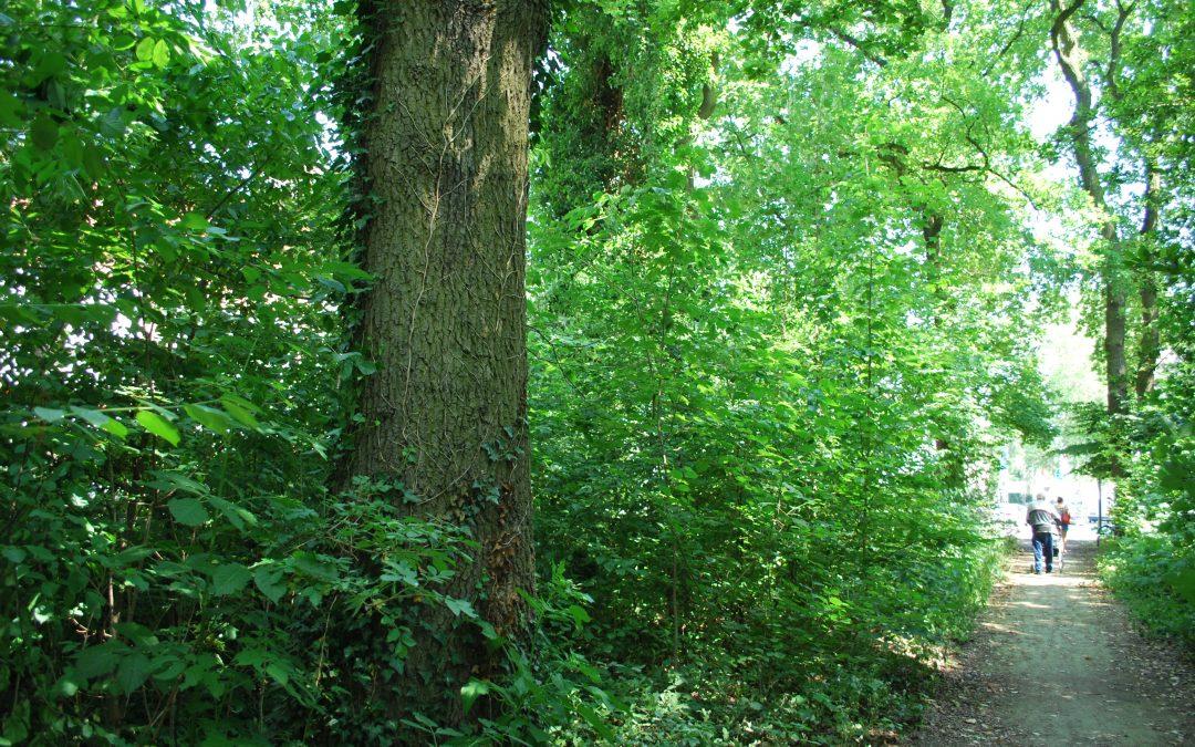 GFL ruft zur Rettung des Kleinbecker Parks auf