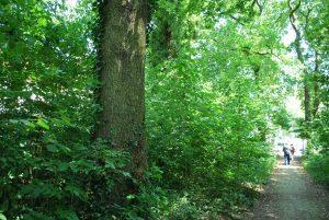 Nach dem Willen von SPD und CDU soll der Kleinbecker Park in Horstmar abgeholzt werden.