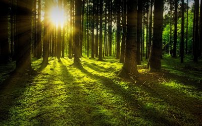 GFL setzt sich für Waldbestand in Lippholthausen ein